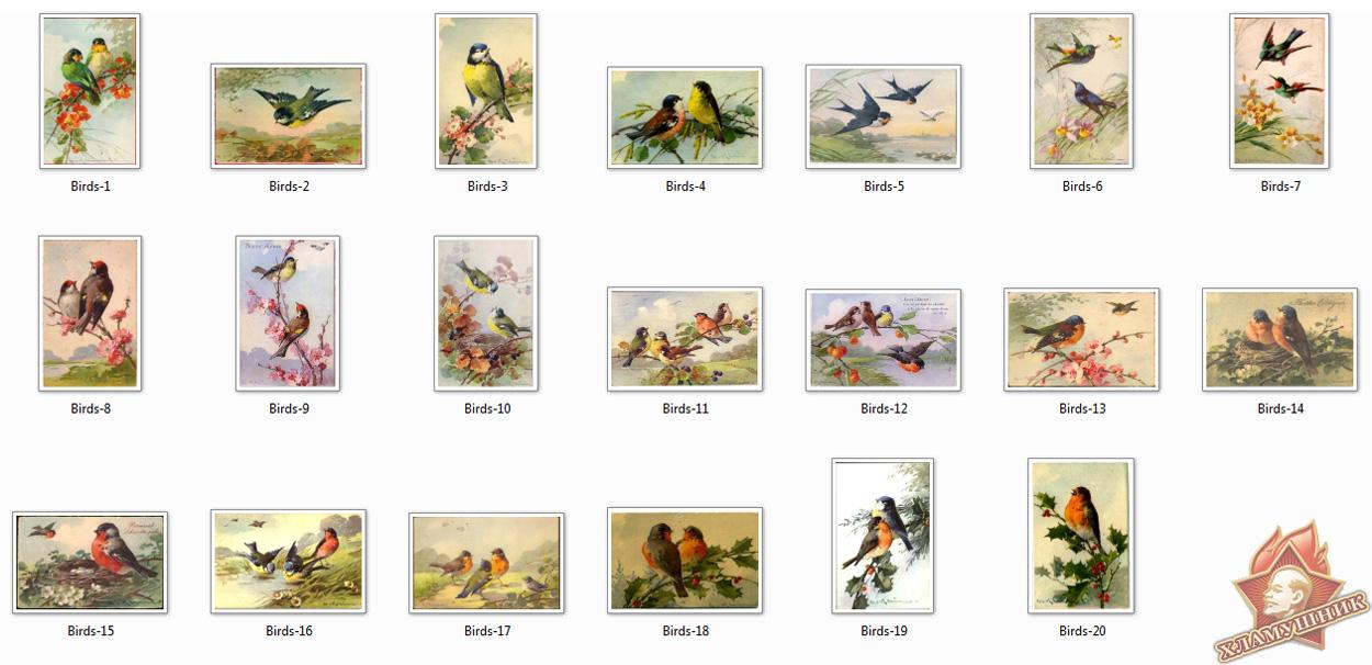 Открытки с птицами.