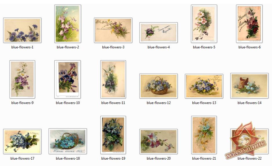 Синие цветы на открытках.