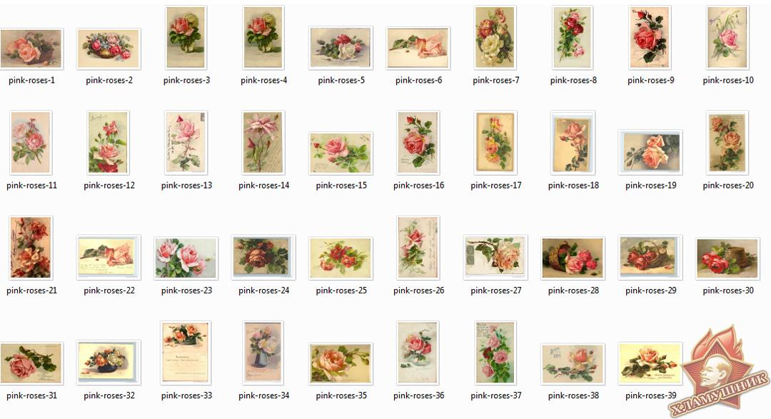 Розовые розы на старых открытках.